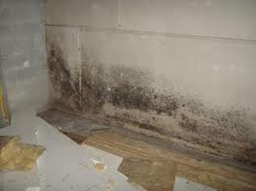 mold in basement home